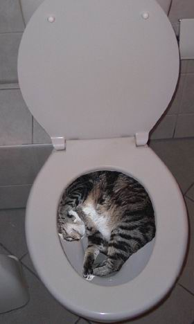 It 39 s friday afternoon and we need more pics of cats in for Commode kitty